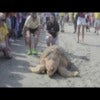 Unprecedented Sea Turtle Release .m4v
