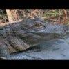 Defining an Eco Safari at Forever Florida