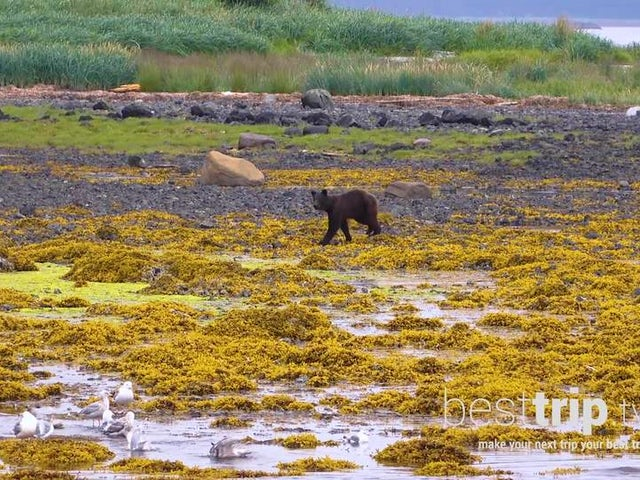 Video: Alaska Wildlife Encounters You Can't Miss