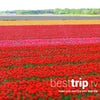 The World's Largest Spring Flower Garden - in Full Bloom on a Tulip-Time River Cruise!