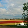 Video Cruise Review: Tulips and Much More on an Avalon Spring Netherlands River Cruise
