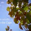 Video: Cape Hospitality