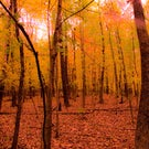 Why Are We So Enamoured by Fall Foliage?