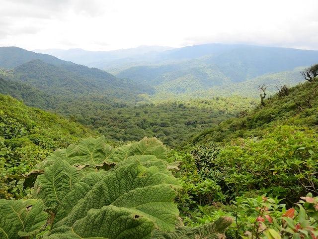 Tropical Costa Rica: Optional 3-Night Jungle Adventure Post Tour Extension
