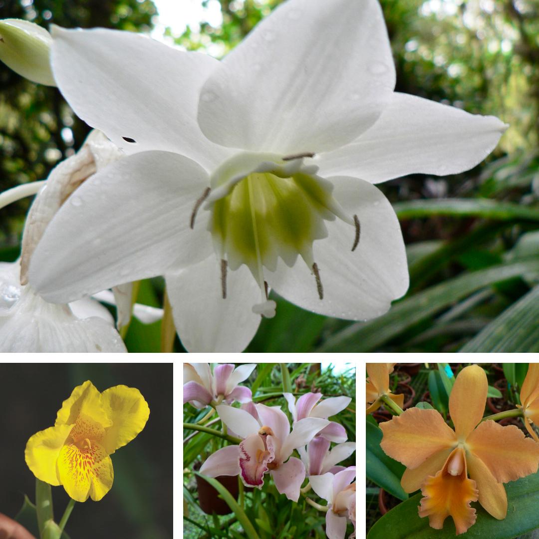 Cartago - Lankester Gardens