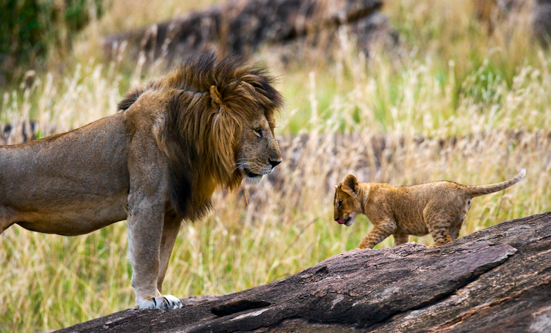 5 Little-Known Facts about Africa's 'Big Five' Animals