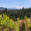 America's 'Rivers of Wine' Inclusive Wine River Cruise on UnCruise Adventures