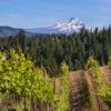 America's 'Rivers of Wine' Inclusive Wine River Cruise on UnCruise Adventures