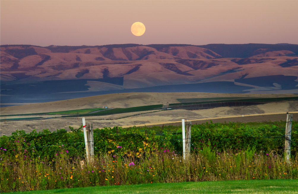 5 American Wine Regions You Need to Visit Next