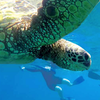 $1000 Aloha Summer Savings on an Uncruise Adventure in Hawaii!