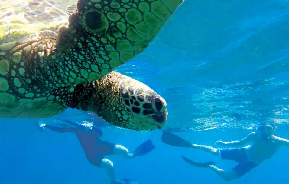 $1000 Aloha Summer Savings on an Uncruise Adventure in Hawaii!