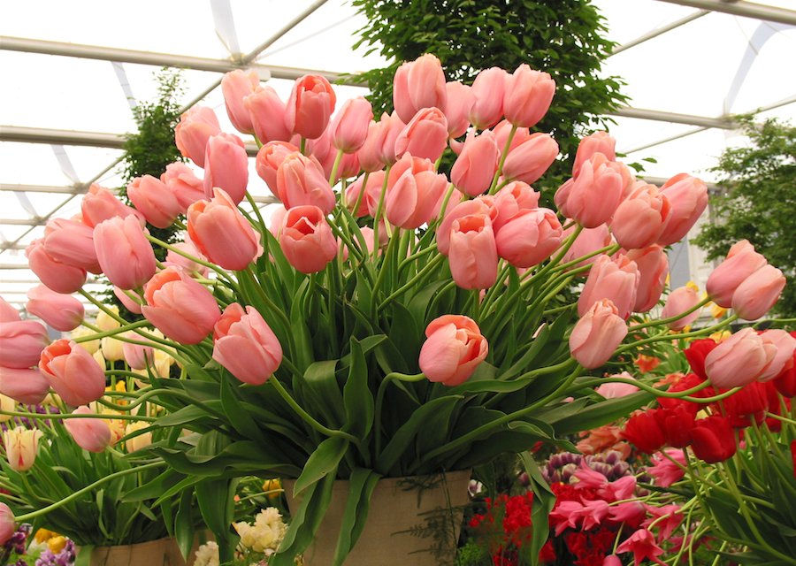 Visit London's Chelsea Flower Show and European Gardens in May!