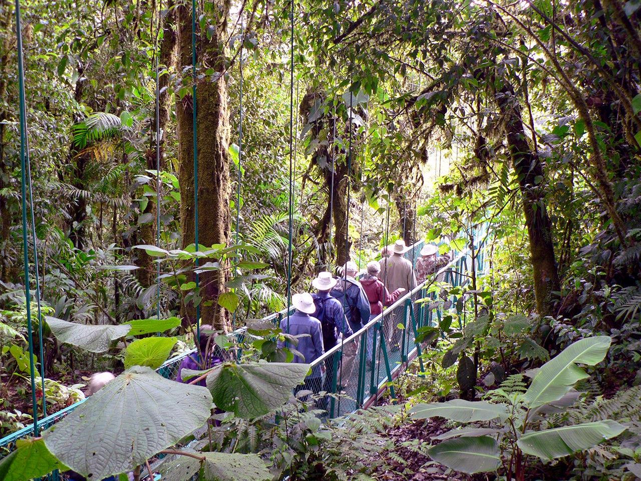 Monteverde - Suspension Bridge