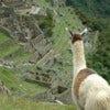 Inca trail Adv comp.jpg