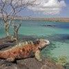 Galapagos Adv. comp.jpg