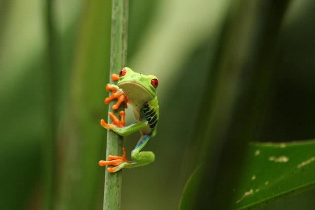 Costa Rica - a Hot Destination!