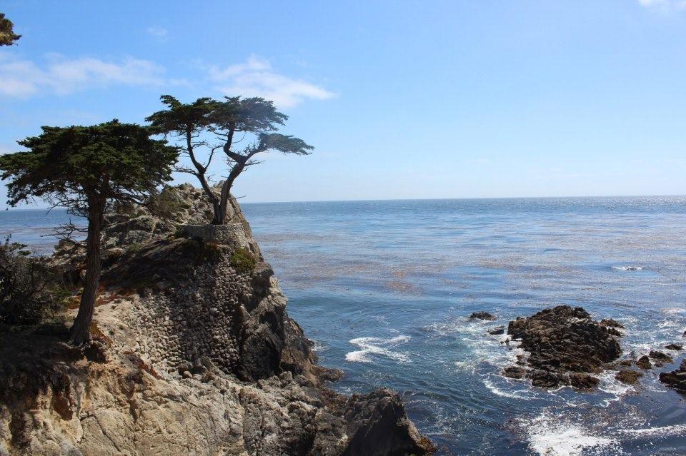 Cypus Tree near Pebble Beach.jpg