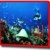 scuba-diving-snorkelling-destinations-in-india.jpg