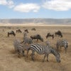 Zebras_and_Wildebeest_in_Ngorongoro_Crater.jpg