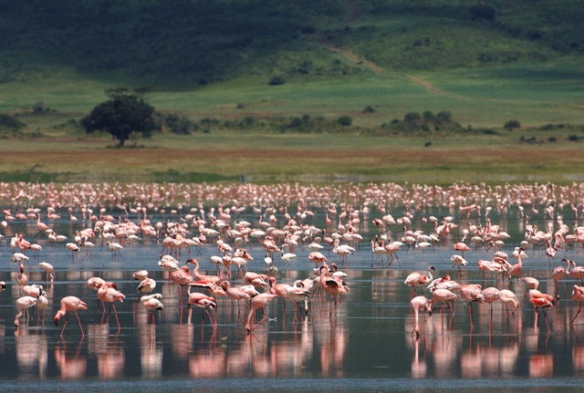 A Heritage site, Ngorongoro Crater