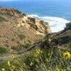 Torrey-Pines-State-Natural-Reserve.jpg