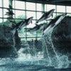 Shedd-Aquarium-1.jpg