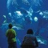 Bor-SC-Aquarium-Ocean-Tank-court-SC-Aquarium1.jpg