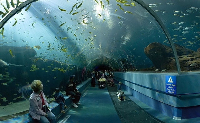 Host and Unforgettable Corporate Event at the Georgia Aquarium
