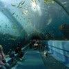 1024px-Georgia_Aquarium_-_Ocean_Voyager_Tunnel_Jan_2006.jpg
