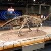 HK_TST_Science_Museum_bones_exhibit_203_恐龍_dinosaur_Sept-2012.JPG
