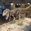 Museum_AL_dinosaur.jpg