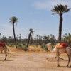 La_Palmeraie_de_Marrakech_701.JPG