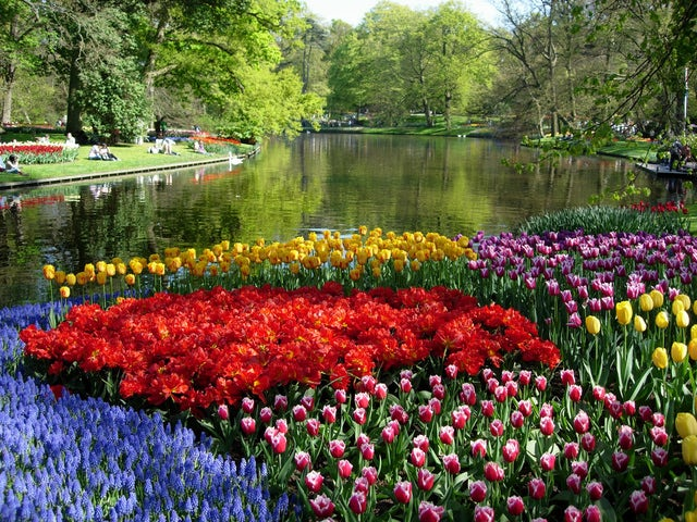 Enjoy the Dutch countryside on the Keukenhof Gardens & Tulip Fields Tour