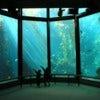 Monterey_bay_aquarium.jpg