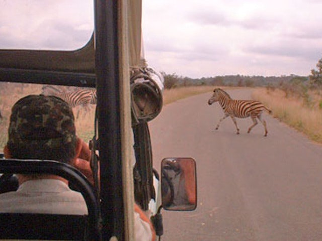See Wildlife on an Afternoon Kruger National Park Game Drive