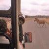 Afternoon Kruger National Park Game Drive_3.jpg