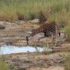 Afternoon Kruger National Park Game Drive_2.jpg