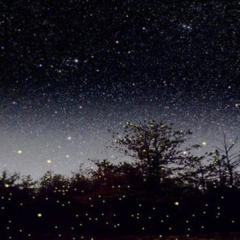See a Rare Natural Phenomenon on a Kuala Selangor Fireflies Tour