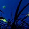 Kuala Selangor Fireflies Tour_1.jpg