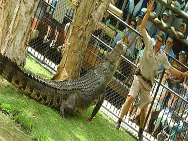 See Australia's Most Dangerous Reptiles at the Croc Express