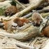 1280px-Cotswolds_Wildlife_Park,_Meerkats_-_geograph.org.uk_-_1805282.jpg