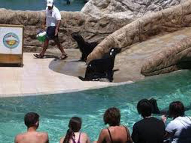 Spend a Day Playing with Sea Lions on the Ocean World Sea Lion Encounter