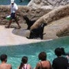 World Sea Lion Encounter_2.jpg
