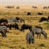800px-NgoroNgoro_Crater,_Tanzania,_Africa.jpg