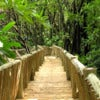 Chimpanzee Eden & Botanical Garden Tour_3.jpg