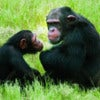 Chimpanzee Eden & Botanical Garden Tour_`2.jpg