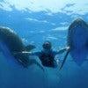 Nuevo Vallarta Dolphin Swim Experience_2.jpg