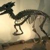 800px-Dracorex_2.jpg