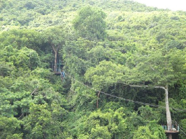 Get a Great Bird's Eye View on an Antigua Rainforest Zip Line Tour