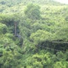 Antigua Rainforest Zip Line Tour_3.jpg